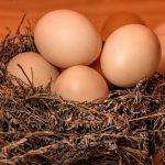 Introducción del huevo en la alimentación complementaria con Baby Led Weaning